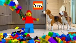 LEGO MAN  in REAL LIFE Raining Legos : Funny Dogs Louie and Marie