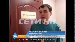 Расстрел двух собак Нижнем Новгороде