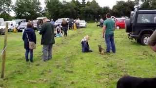 Lockton(north Yorkshire England) Dog Show 15th June 2014 001