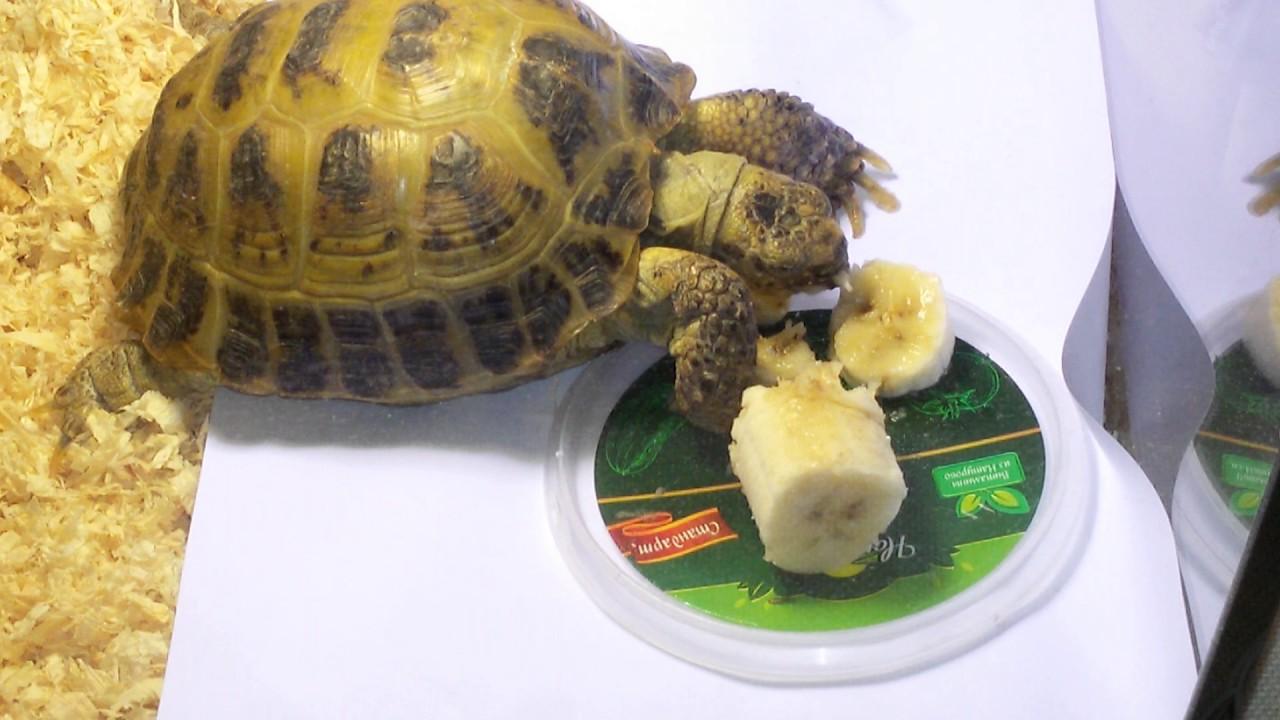 Информация о сухопутных черепах .как их содержат - YouTube