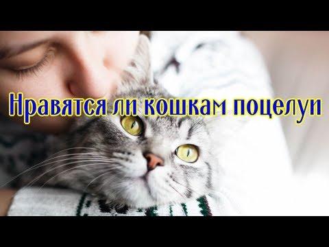 НРАВЯТСЯ ЛИ КОШКАМ ПОЦЕЛУИ DO CATS LIKE KISSING