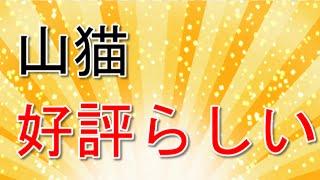 和也主演ドラマ「怪盗 山猫」の視聴率が14・3%と好発進で話題になっ...