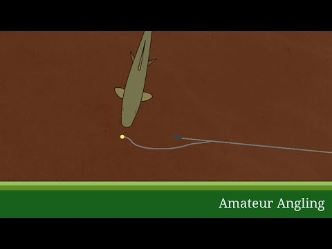 Paternoster rig - Amateur Angling Fishing Glossary