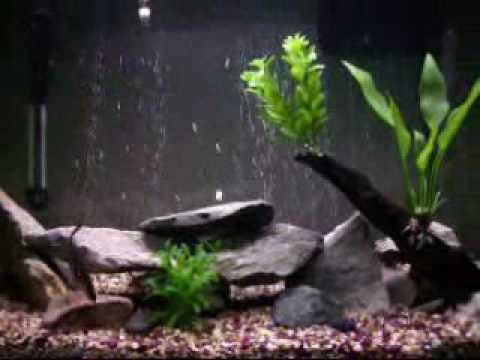 45 gallon tropical aquarium fish youtube for African rope fish