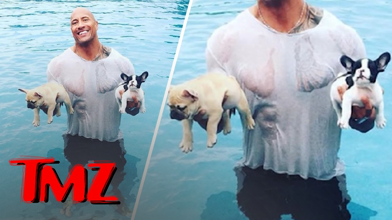 The Rock S Heroic Dog Rescue All Bark Tmz