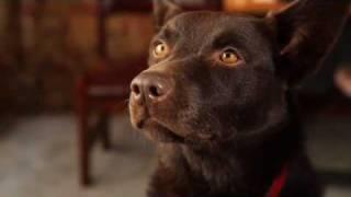 Koko's RED DOG Screen Test