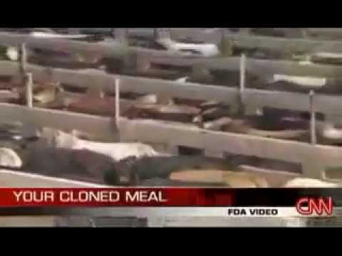 CLONED MEAT - It's in supermarkets already - FDA says No labels required!