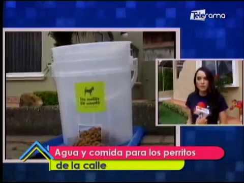 Agua y comida para los perritos de la calle