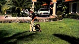 Dog Training Miami Florida / Police Dogs / K9 Training