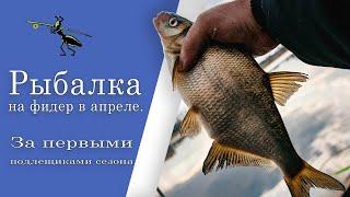 Рыбалка на фидер в апреле За первыми подлещиками сезона Поклевки крупным планом