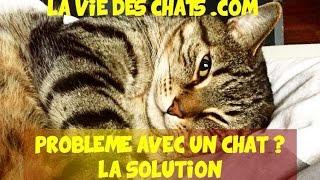 Pour un problème avec un chat, la simple solution
