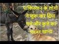 पाकिस्तान के लोगो ने शुरू कर दिया गधे और कुत्ते का MEAT खाना pak media on india
