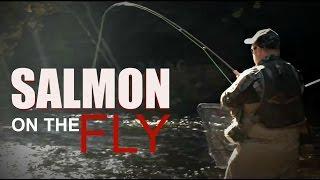 Michigan Salmon Fishing During The Spawn- Michigan Gone Wild