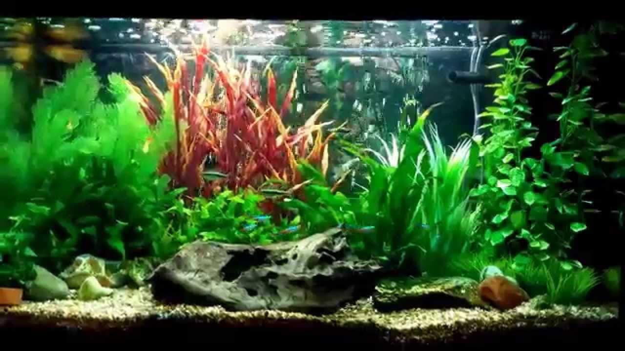 updated juwel rio 125 tropical aquarium youtube. Black Bedroom Furniture Sets. Home Design Ideas