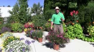 Plants and Flowers: 2013 Standout Performers - Part 2