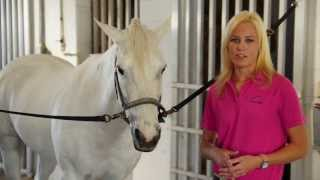 EQUINE VET: How to Check Your Horse's Vital Signs