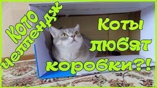 КОТОЧЕЛЛЕНДЖ Насколько сильно коты любят коробки? Приколы с котами :)