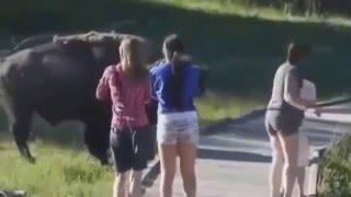 Про животных.Смешное Видео про животных и людей смешно до слез/FUNNY cry about animals