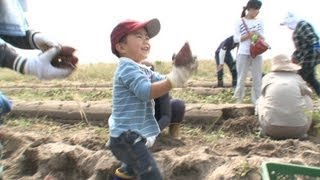 Agriculture recovery in tsunami-hit Watari moves forward
