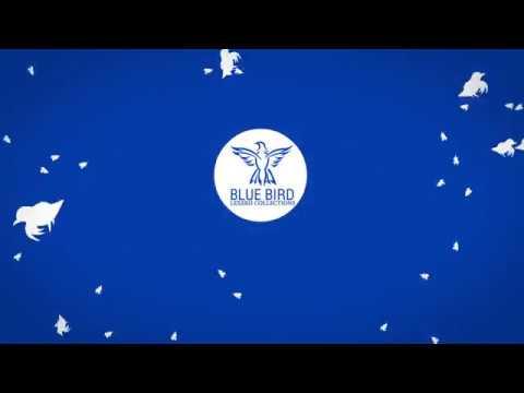Blue Bird Logo Animation