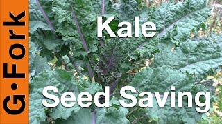 Seed Saving - Kale - Gardenfork.tv
