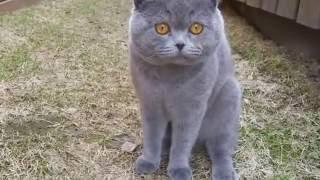 Говорящие коты!!! Прикол Новинка Ржака 2016