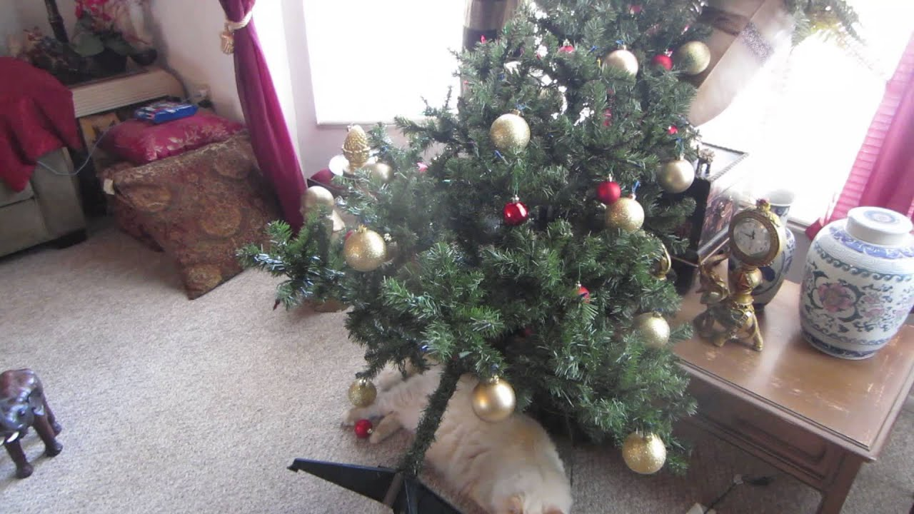 Cat knocks over christmas tree then sleeps under it youtube Christmas tree cat tower