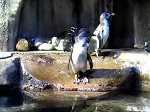 Dubai mall Aquarium and Underwater Zoo.