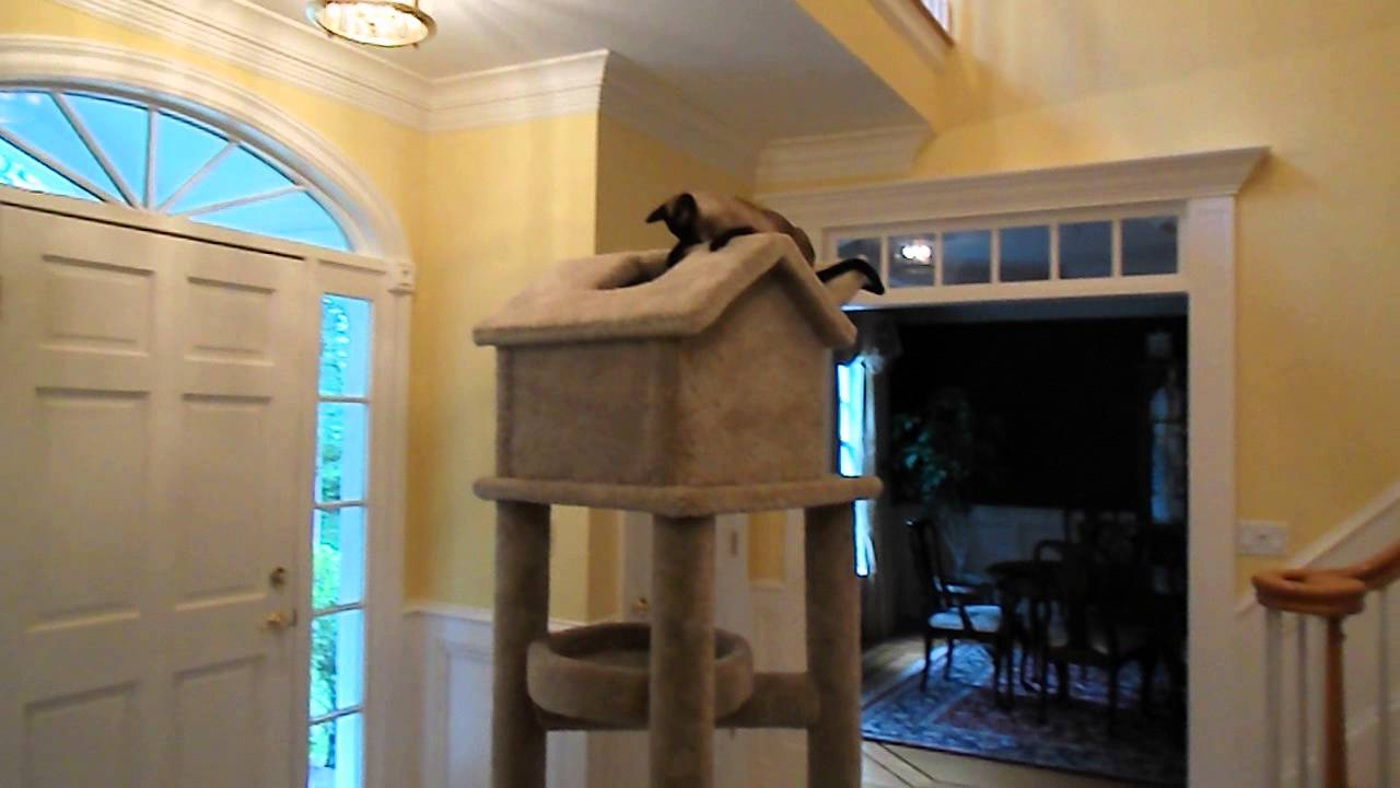 Superior Molly And Friends Cat Tree