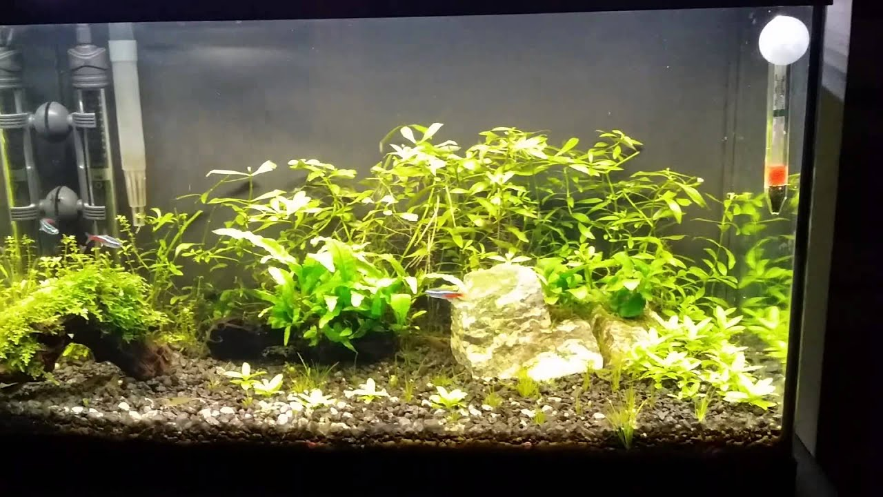 How to light a planted tank and how not to. & How to light a planted tank and how not to. - YouTube