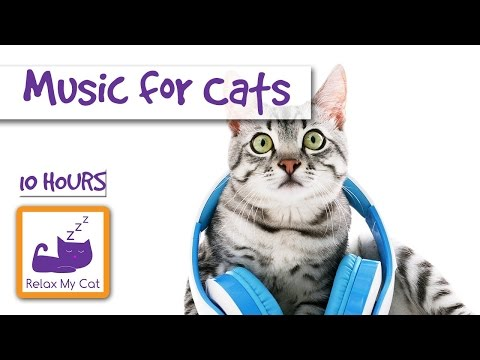 10 Hours of Cat Music OUR LONGEST YET!