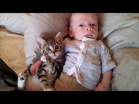 Cats and babies are best friends  Cute baby & cat compilation