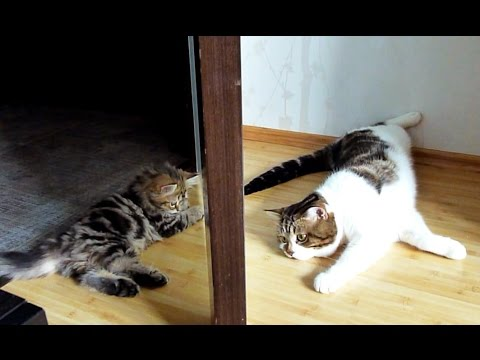 Cats and Cute Kittens Playing together