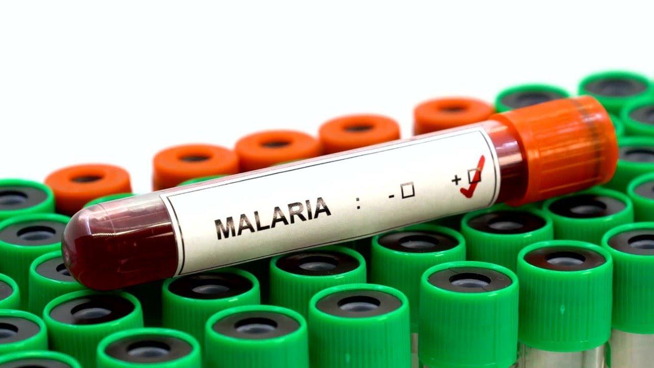 a szaporodási plazma malária fajok skizogóniája bélféreg hazilag