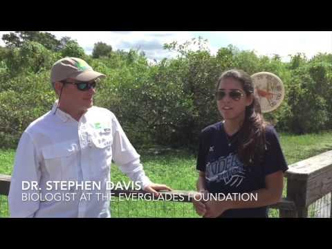 Operation ABP: Algae Bloom Prevention