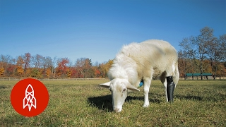 This Farm Fits Injured Animals with Prosthetics