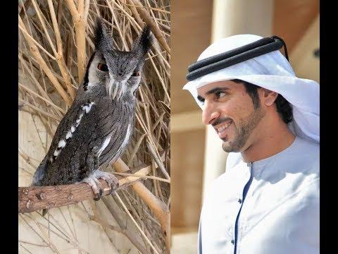 Sheikh Hamdan (فزاع Fazza) and animals (15.03)