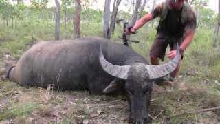 Cam's Raw & Uncut Aussie Water Buff Heart Shot thumbnail