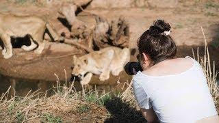 Volunteer in Africa with Lions   GoEco