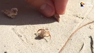 People Help Hermit Crab Choose A New Home | The Dodo
