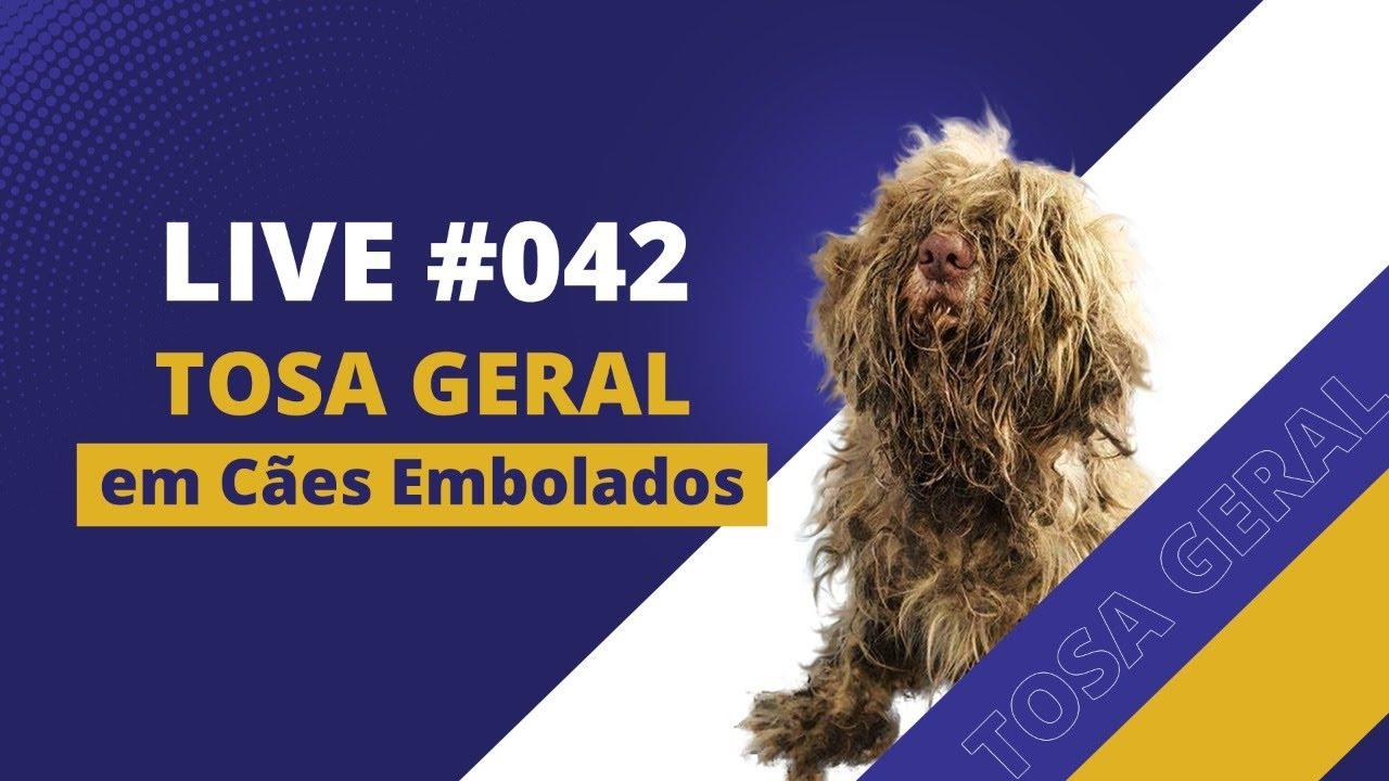 Live#042 - Tosa Geral Passo a Passo [Cães Embolados] (Shih Tzu - Lhasa Apso - Yorkshire - Maltês)