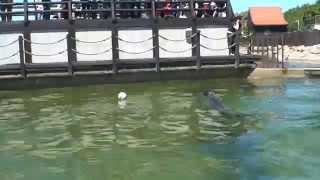 foka na  bałtyku hel foki karmienie fokarium