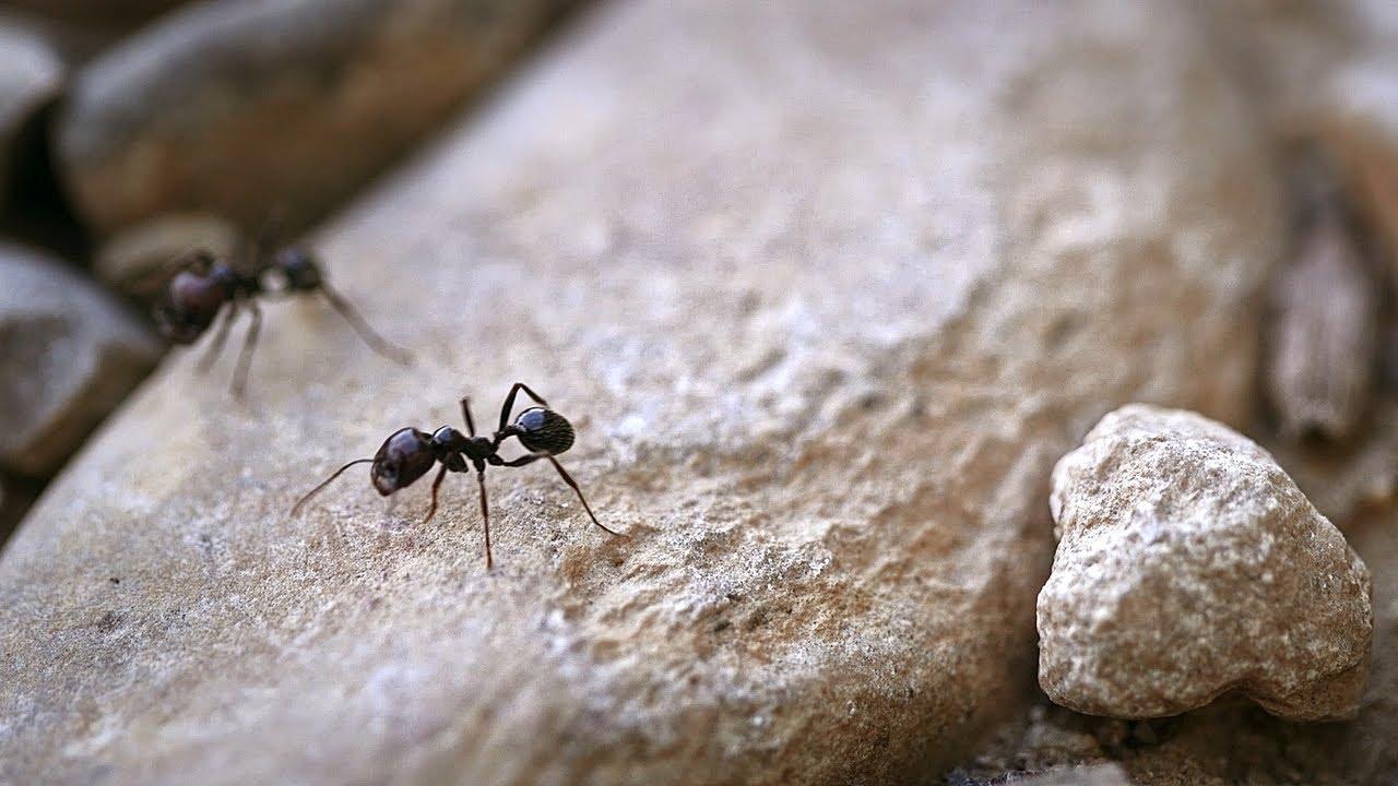 Des fourmis agronomes   Nature = Futur !