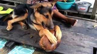 Luckyはココナッツ剥き犬w.