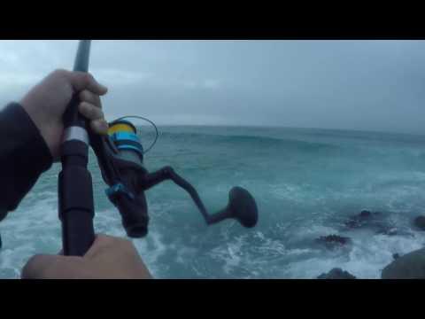 Fishing  - LAND BASED LONGTAIL TUNA - Mid North Cost