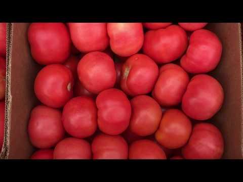 Оптовая база фрукты Рустам - YouTube