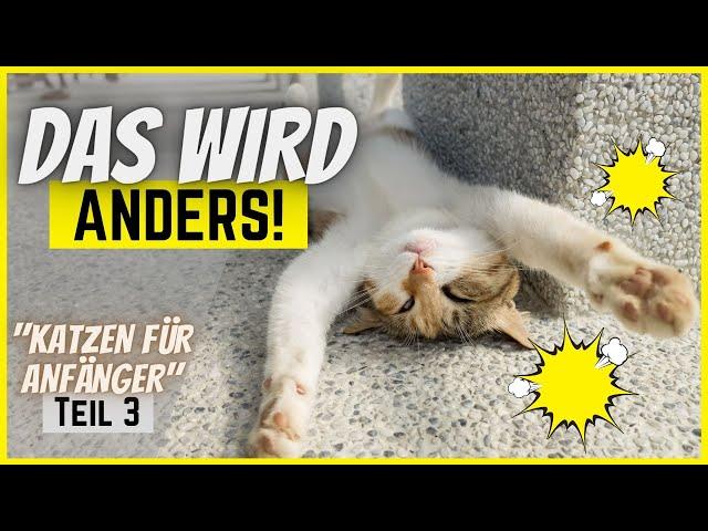 8 große Veränderungen, die eine Katze mit sich bringt 🐈 [Katzen für Anfänger Teil 3/3] 🧶