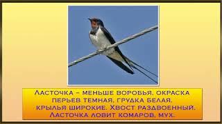 Весна. Перелетные птицы