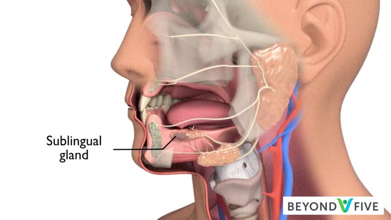 Salivary Gland Cancer - YouTube