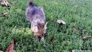 Female cat plays vanishing mouse. Кошка поигралась с мышкой, а та исчезла